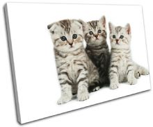 Kittens Cats Pets Animals - 13-1042(00B)-SG32-LO
